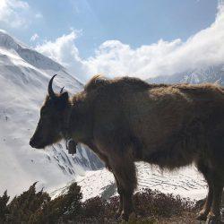 ФОТО ТРЕККИНГ ВОКРУГ МАНАСЛУ (Непал)